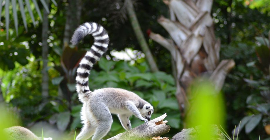 Interesting facts about Madagascar