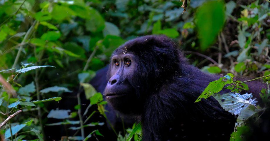 Interesting facts about Rwanda