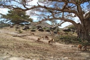 interesting eritrea facts