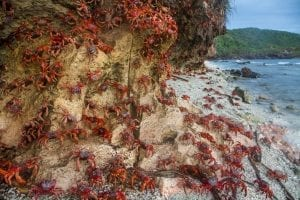 interesting facts about Christmas Island