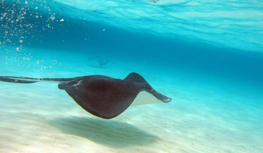 Interesting facts about Grand Cayman