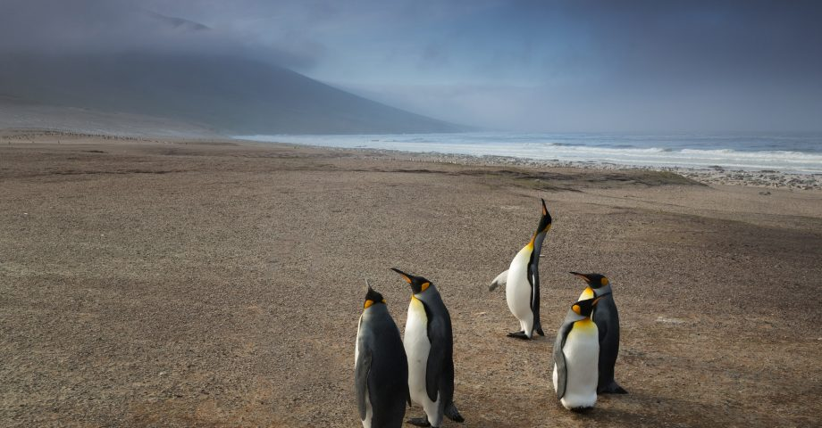 interesting facts about the Falkland Islands