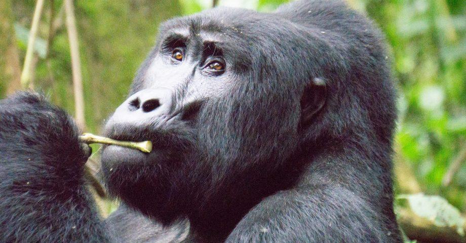 interesting facts about uganda