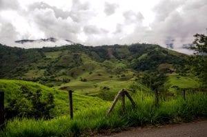 Coffee fields, Colombia