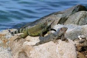 Fun Facts about Aruba