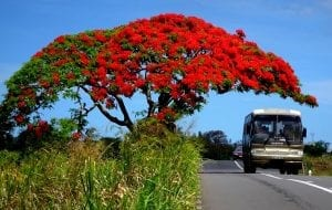 Interesting facts about Mauritius