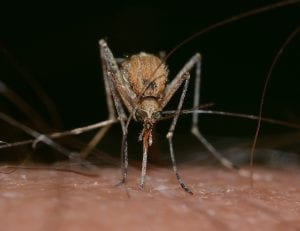 no so fun facts about mosquitos