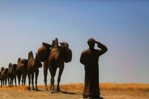 a camel caravan in the desert