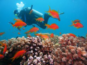 Scuba diving in the Caribbean