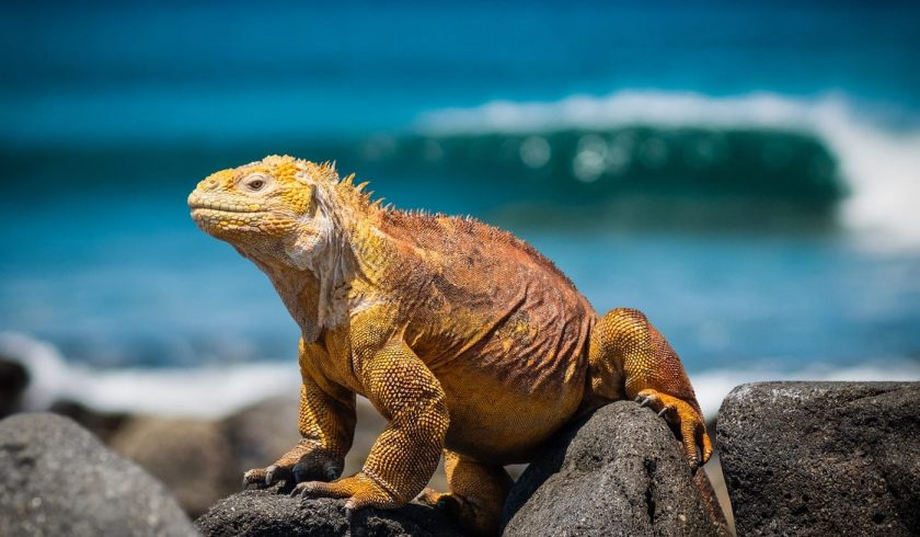 interesting facts about the Galapagos Islands