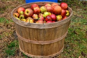 fun facts about apple cider