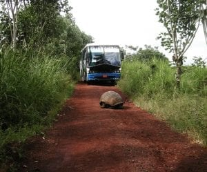 facts about Galapagos Islands