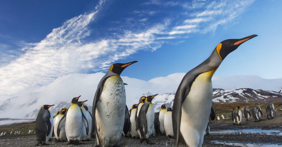 fun facts about Penguins