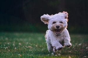 funny facts about dogs