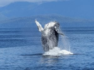 fun facts about the pacific ocean