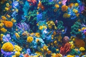 Facts about Coral