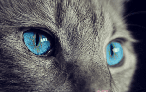 cats eyes facts