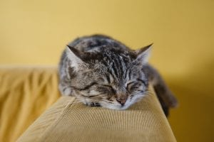 facts about cats sleeping