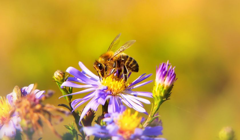 facts about the honeybee