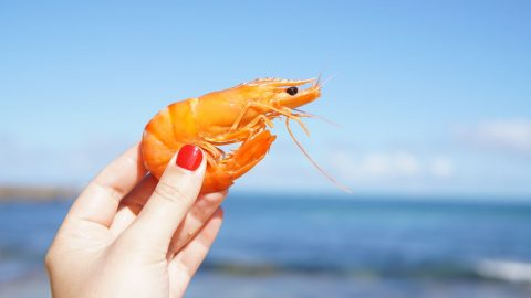 nutrition facts about Shrimp