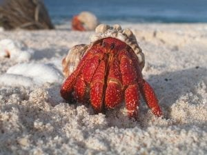Fun facts about Hermit Crabs