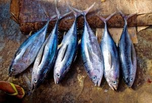 Interesting facts about Tuna