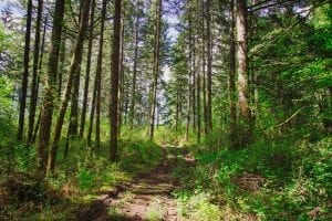 Oregon Trail Facts
