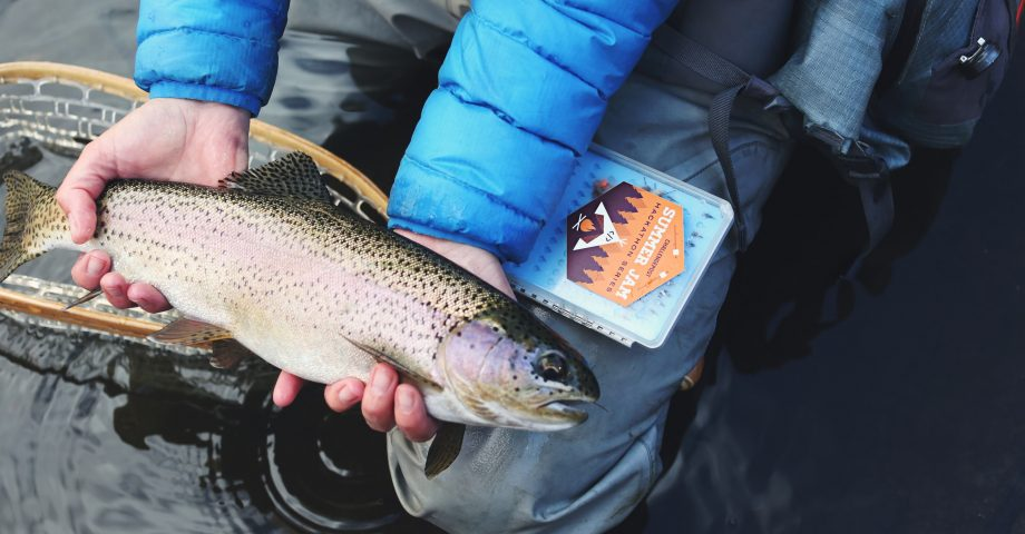 facts about Rainbow Trout