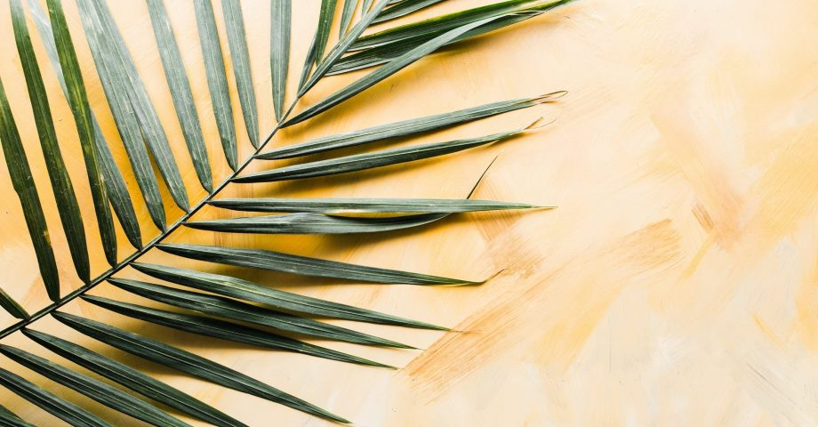 facts about palm sunday