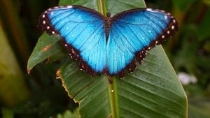 facts about the butterfly