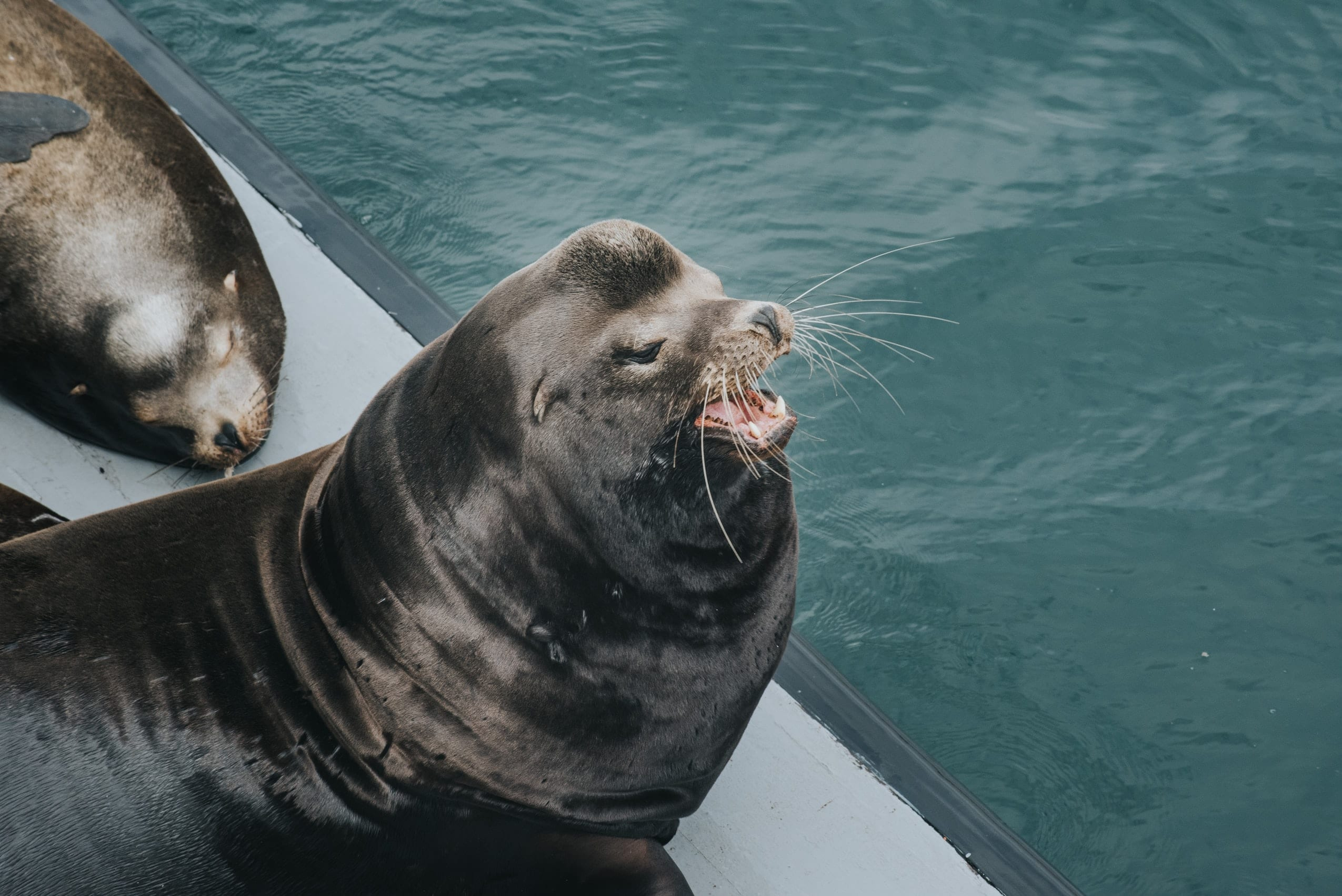15 Fun Loving Facts About Sea Lions Facts