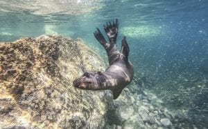 interesting facts about sea lions