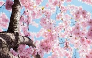 interesting facts about spring
