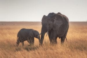 interesting facts about the Serengeti
