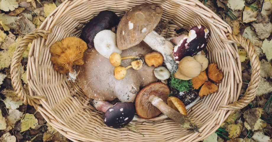 nutrition facts about mushrooms