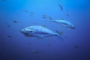 nutrition facts on Tuna