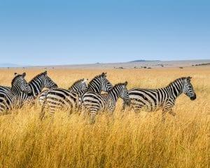 Maasai Mara National Reserve, Narok County, Kenya