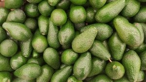 facts on avocados