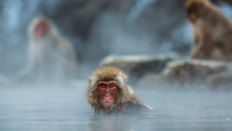 facts about Monkeys