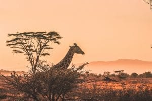 facts about african animals