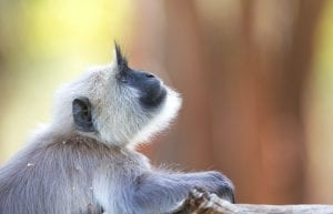 fun facts about Monkeys