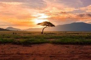 Tsavo East National Park Kenya, Africa, Kenya