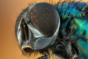 A close up of a house fly
