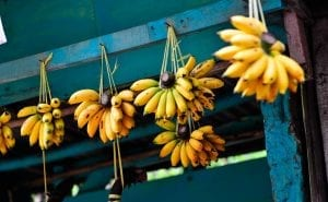 bananas hanging in a shop