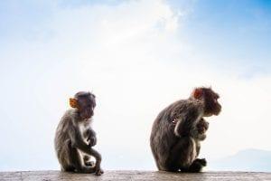 Fun Monkey Facts