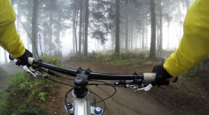 gravel riding through the forest