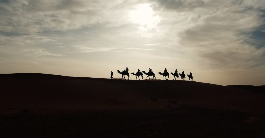 facts about camels