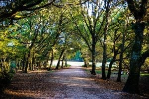 fun facts about the new forest