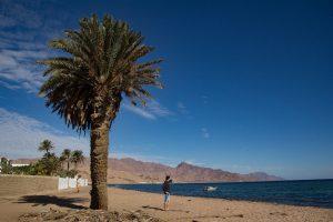 The Sinai Coast, Red Sea