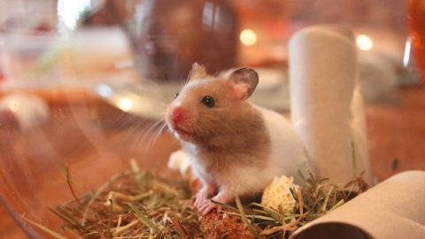 Facts about Hamsters